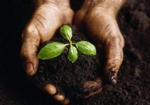 "Flickr, ""soil"" by theresa wallis"